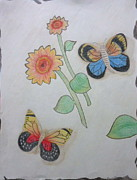 Sunflowers Drawings - Sunflower Butterflies by G Marie