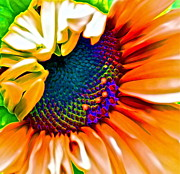 Red Photographs Prints - Sunflower Crazed Print by Gwyn Newcombe