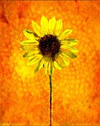 Stamen Mixed Media Framed Prints - Sunflower Energy Framed Print by Barbara Chichester