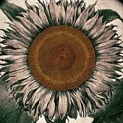 Sunflower - Face To The Sunshine Print by Patricia Januszkiewicz