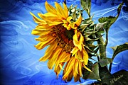 Huge Digital Art Prints - Sunflower Fantasy Print by Barbara Chichester