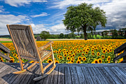Rocking Chairs Framed Prints - Sunflower Farm Framed Print by Debra and Dave Vanderlaan