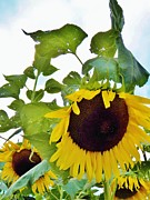 Judy Via-Wolff - Sunflower Fields Forever Two