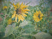 Bart DeCeglie - Sunflower garden