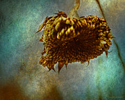 Enjoying Prints - Sunflower Head Print by Coertje Feil