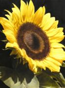 Photorealism Prints - Sunflower I Print by Thomas Darnell