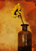 Yelow Prints - Sunflower in a Brown Bottle Print by Marsha Heiken