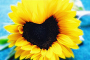 Sun Photo Posters - Sunflower in heart shape Poster by Kristin Kreet