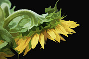 Lee Fortier - Sunflower