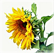 Huge Digital Art Prints - Sunflower on White Print by Barbara Chichester