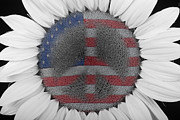 Usa Flags Framed Prints - Sunflower Peace Out Framed Print by James Bo Insogna