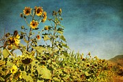 Garden Scene Digital Art Posters - Sunflower Scenic Poster by Peggy J Hughes
