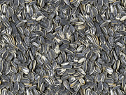 Sunflower Seeds Print by Bedros Awak