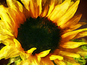 Sunflower Framed Prints - Sunflower Shadow and Light Framed Print by Susan Savad