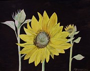 Blooming Paintings - Sunflower Study by Martin Howard