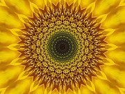Sunflower Sunburst Print by Annette Allman