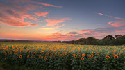 Rural Landscapes Photos - Sunflower Sunset by Bill  Wakeley