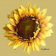 Tom Romeo Digital Art - Sunflower by Tom Romeo