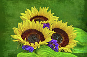 Sandi Oreilly Art - Sunflower Trio by Sandi OReilly