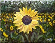 Wagner Chaves - Sunflower