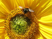 Jeepee Aero - Sunflower With Bee