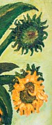Jott Dgottoel Fine Art - Sunflowers #2c For...