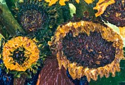 Jott Dgottoel Fine Art - Sunflowers #2k For...