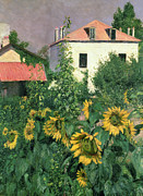 Foliage Paintings - Sunflowers in the Garden at Petit Gennevilliers  by Gustave Caillebotte