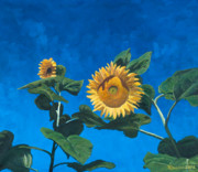 Marco Busoni - Sunflowers