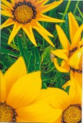 Robert Bray Metal Prints - Sunflowers Medley Metal Print by Robert Bray