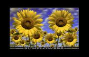 Sunflowers Print by Mike McGlothlen