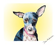 Animal Shelter Drawings - Sunga - a former shelter sweetie by Dave Anderson