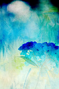 Digitally Altered Floral Posters - Sunkissed Hydrangeas Poster by Bonnie Bruno