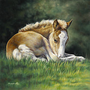 Foal Paintings - Sunkissed by Linda Shantz