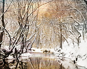 Snow Scene Prints - Sunkissed Winter Creek Print by Jai Johnson