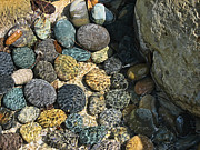 Dappled Light Photos - Sunlight On Wet Rocks by Wendy J St Christopher