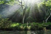 Michael Sweet Prints - Sunlight Rays through Trees Print by M Swiet Productions