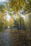 Fallen Leaf Photos - Sunlight Streaming Through The Trees by Jacques Laurent