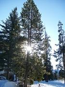 Jewel Hengen - Sunlight Through A Tree