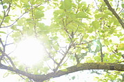 Hope Photos - Sunlight through leaves in summer by Sami Sarkis
