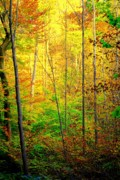 Vivid Fall Colors Art - Sunlights Warmth by Robert Harmon