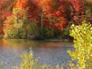 Sunlit Autumn Print by Ann Horn