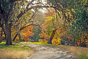 Wimberley Prints - Sunlit Fall Colors Print by Robert Anschutz