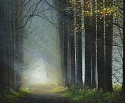 Lit Paintings - Sunlit Path by Cecilia  Brendel