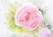 Trilby Cole - Sunlit Rose