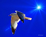 At Poster Digital Art - Sunlit Seagull Wings by Barbara Chichester