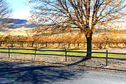 Yakima Valley Framed Prints - Sunny Autumn Day Framed Print by Carol Groenen