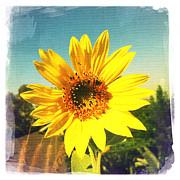Nina Prommer - Sunny Day Sunflower