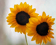 Tammy Espino - Sunny flower on a rainy...