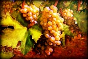 Print On Acrylic Framed Prints - Sunny Grapes - edition 2 Framed Print by Lilia D